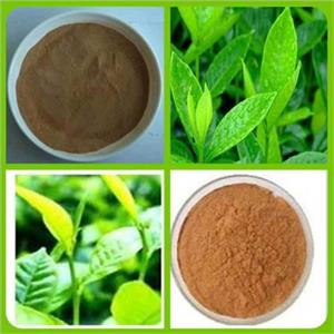 green tea extract powder - MING CHEMICAL